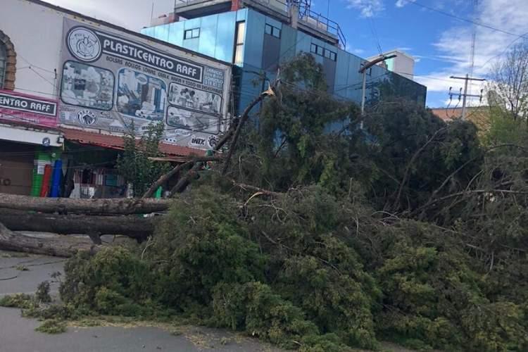 Derriban rachas de viento 166 árboles en Edomex